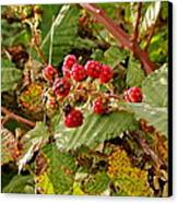 Wild Berries Canvas Print by Liz Vernand