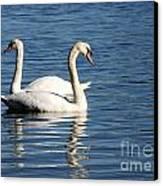 Wild Swans Canvas Print by Sabrina L Ryan