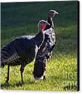 Wild Turkeys Canvas Print by Mike  Dawson