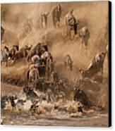 Wildebeest And Zebra Canvas Print by Marsch1962UK