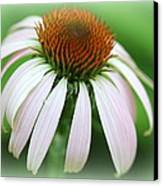 Wildflower In The Park Canvas Print by Maureen  McDonald