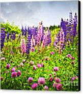 Wildflowers In Newfoundland Canvas Print