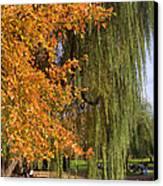 Willow In The Garden Canvas Print by Joann Vitali