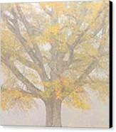 Willow Oak In Fog Canvas Print by Bill Swindaman