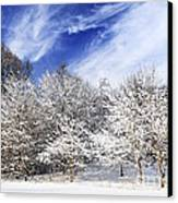 Winter Forest Covered With Snow Canvas Print by Elena Elisseeva