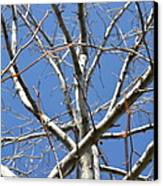 Winter's Branches Canvas Print by Naomi Berhane