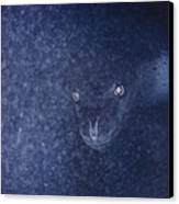 With Glowing Eyes, A Leopard Seal Peers Canvas Print by Bill Curtsinger