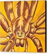 Wolf Spider Canvas Print by Thomas Maynard