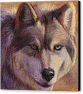 Wolf Study Canvas Print