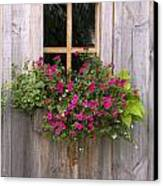 Wooden Shed With A Flower Box Under The Canvas Print by Michael Interisano