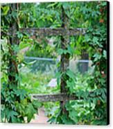 Wooden Trellis And Vines Canvas Print by Nancy Mueller