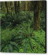 Woodland Rain Forest View With Mosses Canvas Print by Melissa Farlow