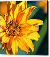 Yellow Beauty Canvas Print by Rourke