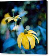 Yellow Cone Flower On Blue Background Canvas Print by Marcio Faustino