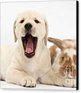 Yellow Lab Puppy With Rabbit Canvas Print