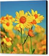 Yellow Wildflowers Canvas Print by Sandy L. Kirkner