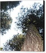 Yosemite Skyline Canvas Print