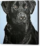 Young Black Labrador Canvas Print