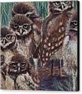 Young Burrowers Canvas Print by Thomas Maynard
