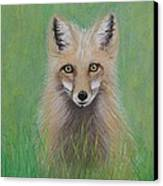 Young Fox Canvas Print by David Hawkes