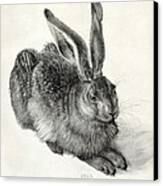 Young Hare, By Durer Canvas Print