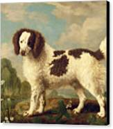 Brown And White Norfolk Or Water Spaniel Canvas Print by George Stubbs