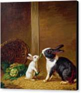 Two Rabbits Canvas Print by H Baert