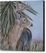 Berry Buck Canvas Print