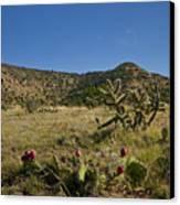 Black Mesa Cacti Canvas Print by Charles Warren