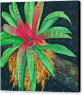 Bromeliad Canvas Print by Charles Yates