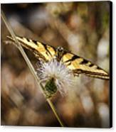 Butterfly Canvas Print by Kelley King