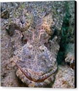 Crocodile Fish Canvas Print by Joerg Lingnau
