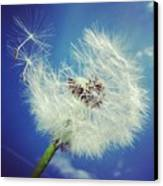 Dandelion And Blue Sky Canvas Print by Matthias Hauser