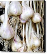 Drying Garlic Canvas Print by Thomas R Fletcher