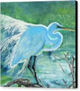 Egret In The Summer Breeze  Canvas Print
