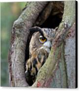 Eurasian Eagle-owl Bubo Bubo Looking Canvas Print