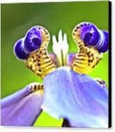 Iris Flower Canvas Print by Heiko Koehrer-Wagner