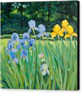 Irises In The Garden Canvas Print