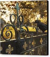 Jackdaw On Church Gates Canvas Print by Amanda Elwell