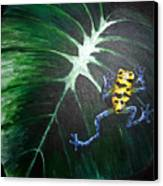 Little Frog In A Big World Canvas Print
