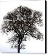 Lone Tree In Field Canvas Print by John Short