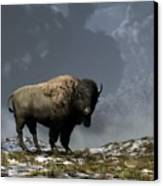 Lonely Bison Canvas Print