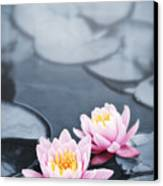 Lotus Blossoms Canvas Print by Elena Elisseeva