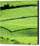 Mowing Hay  Canvas Print by Thomas R Fletcher