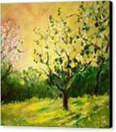 Orchard 45 Canvas Print
