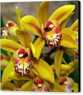 Orchid 9 Canvas Print by Marty Koch
