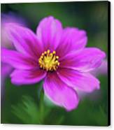 Painted Daisy Canvas Print by June Marie Sobrito