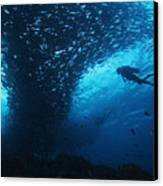 Palau, Diving Canvas Print by Dave Fleetham - Printscapes