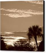 Palms In The Clouds Canvas Print