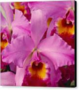 Pink Cattleya Orchids Canvas Print by Allan Seiden - Printscapes